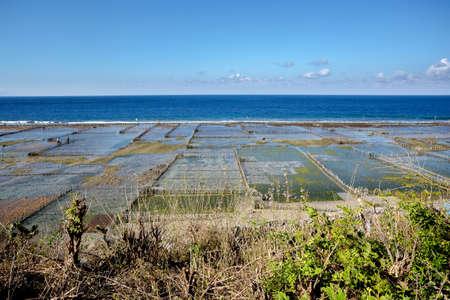 algal: Plantations of seaweed on beach in Bali, Nusa Penida, Toyapakeh village