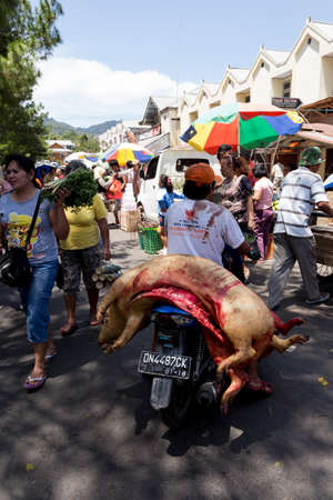 sulawesi: SULAWESI, INDONESIA - AUGUST 8.2015:, Traditional Marketplace, man on bike with two pigs in Tomohon City, Sulawesi,August 8. 2015 Sulawesi, Indonesia.