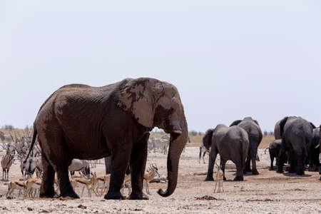 cebra: Charca llena de elefantes, cebras, gacelas y orix. Etosha National Park, Ombika, Kunene, Namibia. La verdadera vida al aire libre Foto de archivo