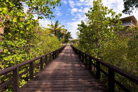 sulawesi: wooden walkway in trees, North Sulawesi, Manado, Indonesia