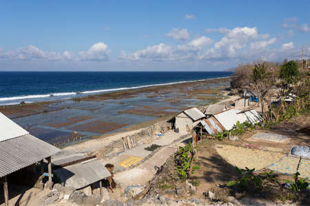algal: Plantations of seaweed on beach in Bali, Nusa Penida, Toyapakeh village