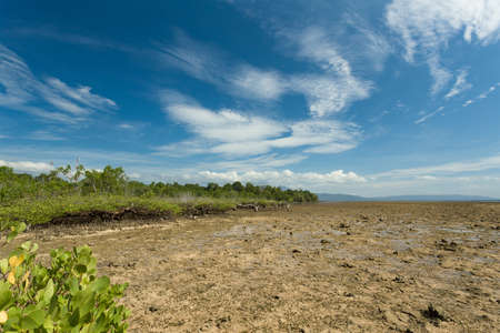 sulawesi: wide shoot of mangrove North Sulawesi, Indonesia with blue sky