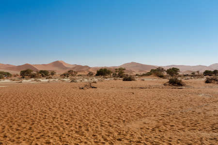 shaddow: beautiful sunrise landscape of hidden Dead Vlei in Namib, blue sky, best place of Namibia