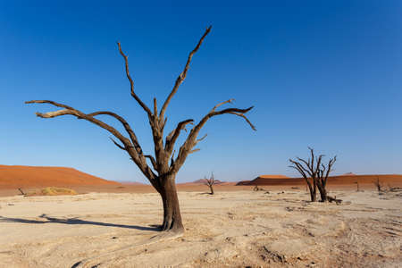 best place: wide panorama of beautiful sunrise landscape of hidden Dead Vlei in Namib, blue sky, best place of Namibia