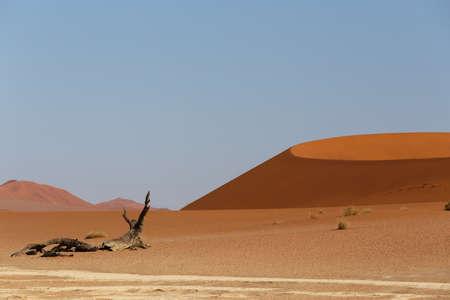best place: beautiful sunrise landscape of hidden Dead Vlei in Namib, blue sky, best place of Namibia