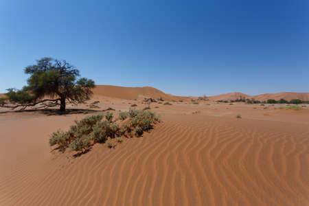 shaddow: beautiful sunrise landscape of hidden Dead Vlei in Namib, blue sky, best place of Namibia