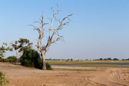chobe national park: wild african landscape, Chobe national park, Botswana, Africa