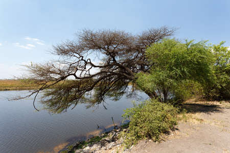 discovery channel: landscape of Chobe river in Chobe national park, Botswana, Africa Stock Photo