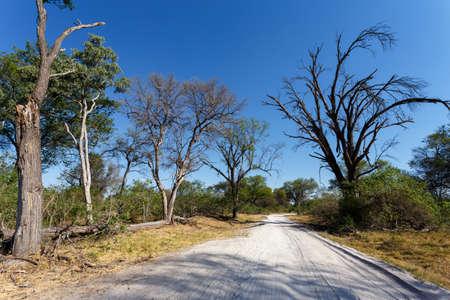Okavango Delta: gravel road to Okavango delta Moremi game Reserve, Botswana