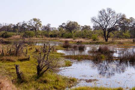 okavango delta: beautiful landscape in the Okavango swamps with water lilies, Okavango Delta, Botswana Stock Photo