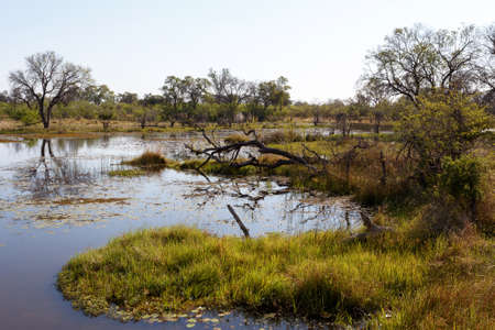 morass: beautiful landscape in the Okavango swamps with water lilies, Okavango Delta, Botswana Stock Photo