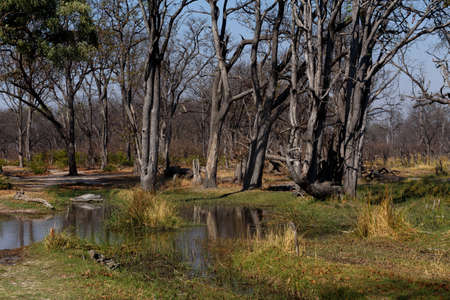 morass: beautiful landscape in the Okavango swamps, Moremi game reserve landscape, Okavango Delta, Botswana Stock Photo