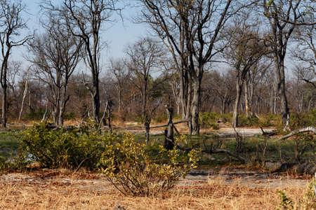 morass: beautiful landscape in the Okavango swamps, Moremi game reserve landscape, Okavango Delta, Botswana Stock Photo