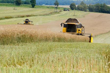 yellow combine in summer harvesting rape on farmlad, rural scene