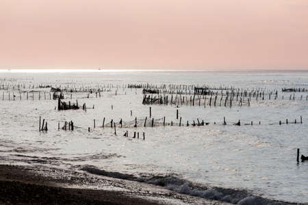 algal: Bali, Nusa Penida Island, Toyapakeh, Indonesia - Plantations of seaweed, algae at low tide with blue sky