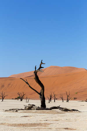 best place: Sossusvlei beautiful sunrise landscape of hidden death valley in Namibian desert with blue sky, best place in Namibia Stock Photo