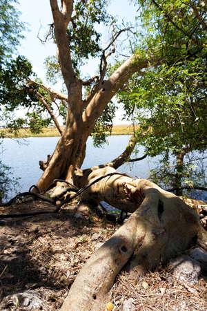 chobe national park: landscape of Chobe river in Chobe national park, Botswana, Africa Stock Photo