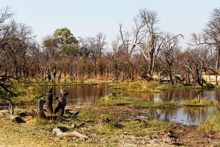 the game reserve: beautiful landscape in the Okavango swamps, Moremi game reserve landscape, Okavango Delta, Botswana Stock Photo