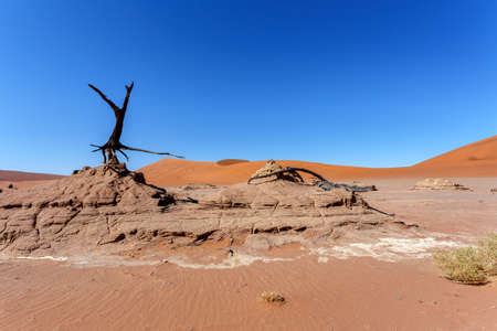 shaddow: beautiful sunrise landscape of hidden Dead Vlei in Namib desert with blue sky, this is best place of Namibia