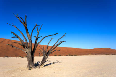 best place: beautiful sunrise landscape of hidden Dead Vlei in Namib desert with blue sky, this is best place of Namibia