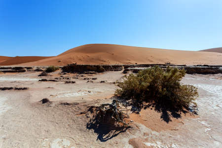 vlei: beautiful sunrise dune in hidden Dead Vlei in Namib desert with blue sky, this is best place of Namibia