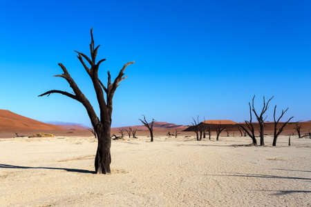 vlei: beautiful sunrise landscape of hidden Dead Vlei in Namib desert with blue sky, this is best place of Namibia