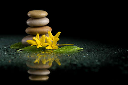 black stones: balancing pebble stones and yellow flower with water drop, ZEN stone, on black background, spa tranquil scene concept with reflection