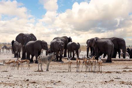 full waterhole with Elephants, zebras, springbok and orix. Etosha national Park, Ombika, Kunene, Namibia. wildlife photography