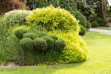 grass beautiful: Beautiful spring garden design, with conifer trees, green grass and eneving sun. Luxury design, Gardening. Green garden in spring.