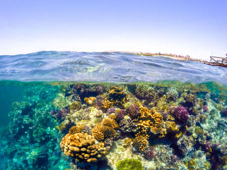 waterline: Underwater and surface split view in the tropics paradise with fish and coral reef, above waterline, beautiful view on pier on red sea. Egypt, snorkeling vacation concept