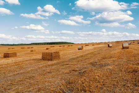 harvested field with straw bales with evening sun, summer agriculture concept, czech republic