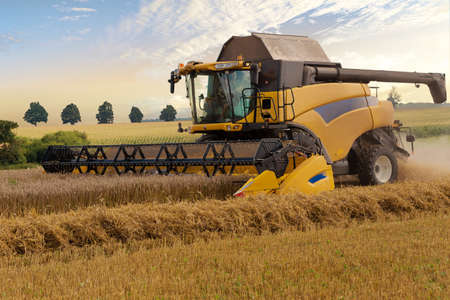 yellov: Yellov harvester automatic combine on field harvesting wheat in sunny weather. Agriculture summer scene. Harvesting concept Stock Photo