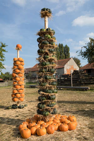 ahorcada: Orange and green harvested ripe pumpkins hanged on totem as autumn Halloween decoration and still life in garden. Rural countryside scene. In backgoun straw hut Foto de archivo