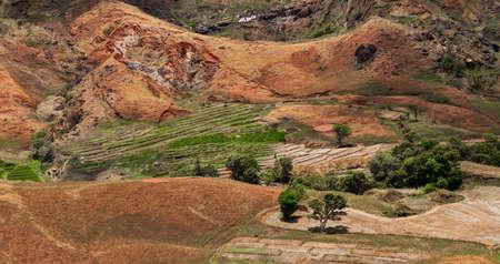 penury: Malagasy farm, small terraced fields with rice and vegetables. Traditional Madagascar countryside scene. Mahajanga Province, madagascar