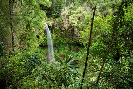 Small waterfall in Amber mountain national park with richest biodiversity. Madagascar virgin nature landscape. Banco de Imagens - 66647245