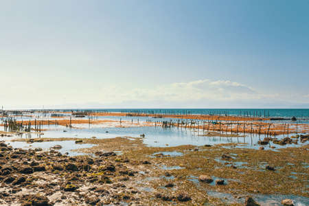 livelihoods: Bali, Nusa Penida Island, Toyapakeh, Indonesia - Plantations of seaweed, algae at low tide with blue sky. Algae cultivation is traditional livelihoods Stock Photo