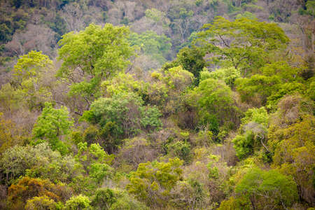 Landscape of rainforest in Ankarafantsika national park, woodland with tropical climate, Madagascar wilderness