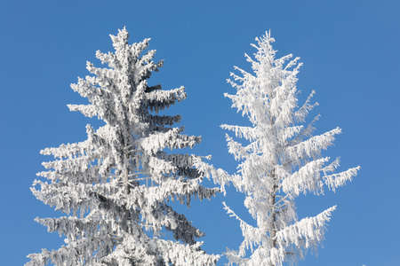 Nice winter landscape with trees covered by snow, sunny day and trees with hoarfrost and icing Stock Photo