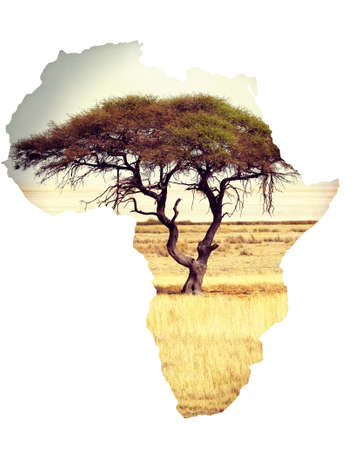 continente africano: Typical large Acacia tree in the open savanna plains of East Africa, Botswana Hwankee. Map of africa continent concept