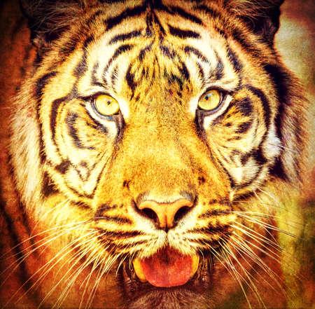 panthera tigris sumatrae: portrait of sumatran tiger (Panthera tigris sumatrae) in abstract color Stock Photo