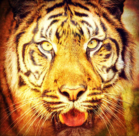 portrait of sumatran tiger (Panthera tigris sumatrae) in abstract color Stock Photo