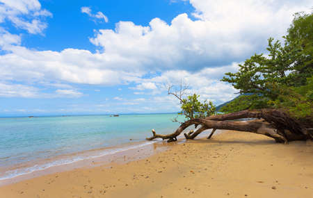 Beautiful dream paradise beach in Masoala national park, Maroantsetra, Madagascar. Blue sky and clear sea, Wilderness pure nature scene