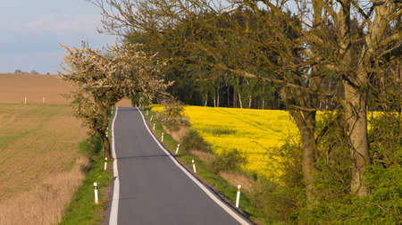 road with trees in spring, rural countryside landscape Stock Photo