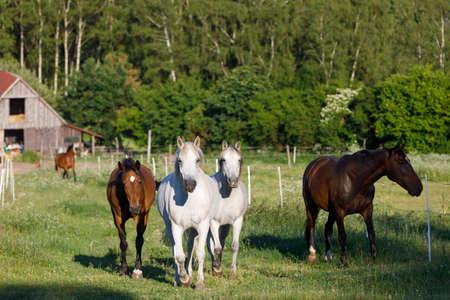 prachtige kudde paarden in de boerderij, landelijk landschap scène Stockfoto