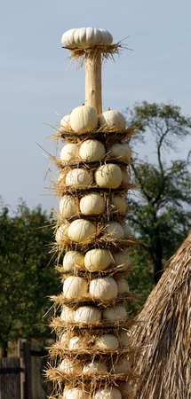 ahorcada: Las calabazas maduras cosechadas se cuelgan en el tótem como decoración de otoño de Halloween y la naturaleza muerta en la granja. Escena campestre rural