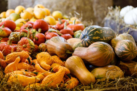 various types of ripe autumn pumpkins on the farm as pleasing fall still life