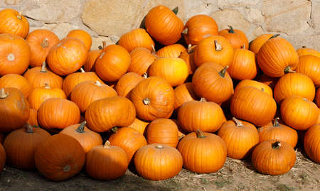 ripe autumn pumpkins on the farm as pleasing fall still life. Rural countryside scene Stock Photo