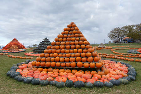 Autumn harvested pumpkins arranged for fun like pyramid with color variations. Halloween holiday concept on pumpkin world. Stock Photo