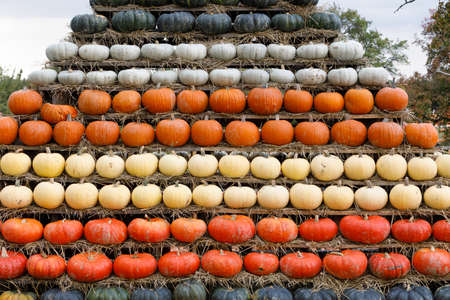 Autumn harvested pumpkins arranged for fun like pyramid with color variations. Halloween holiday concept background.