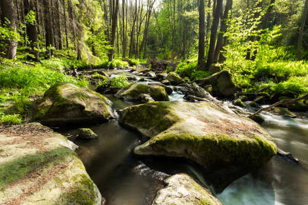 small mountain wild river. Valley in beautiful spring green colors. Picturesque landscape.